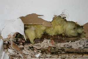 Mold Remediation Removal Los Angeles